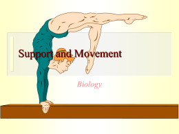 Support and Movement