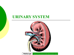 URINARY SYSTEM - Hastaneciyiz's Blog