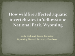 How wildfire affected aquatic invertebrates in Yellowstone National