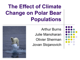The Effect of Climate Change on Polar Bear Populations