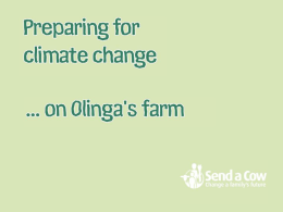 Climate-change-on-olingas-farm.