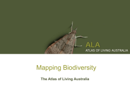 Banksia serrata - Atlas of Living Australia
