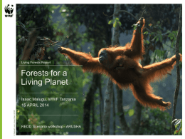 Living Forests and the REDD project
