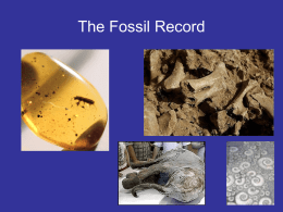 The Fossil Record - Porterville Unified School District