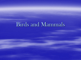 Birds and Mammals - Fort Thomas Independent Schools