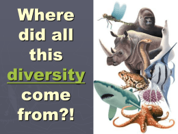 Why is life on Earth so diverse???