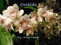 Orchids - Chicago High School for Agricultural Sciences
