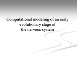Computational modeling of an early evolutionary stage of