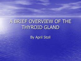 The Thyroid - Metabolism