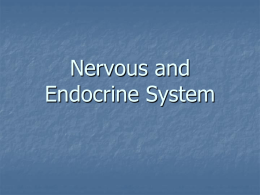 Nervous and Endocrine System