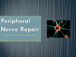 Peripheral Nerve Repair