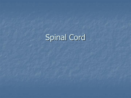 Spinal Cord and Spinal Nerves