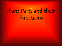 Plant Parts and their Function