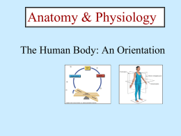 The Human Body PPT