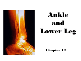 Ankle and Lower Leg - ProvidencePanthersSportsMedicine