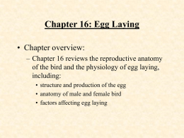 Chapter 1: Animal Agriculture