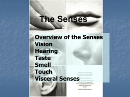 Senses powerpoint new