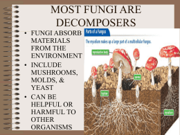 MOST FUNGI ARE DECOMPOSERS