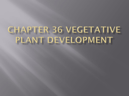 Chapter 36 Vegetative plant development