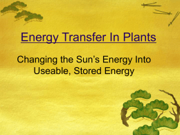 Energy Transfer In Plants