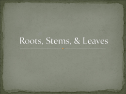 Roots, Stems, & Leaves