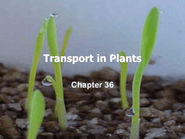 Transport in Plants - Diablo Valley College