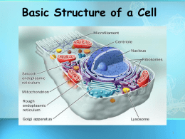 Basic Structure of a Cell - Moreno Valley High School