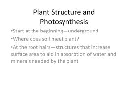 Plant Structure and Photosynthesis