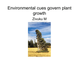 lecture 12 Plant growth_ Environmental cues