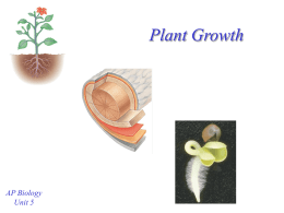 Plant Growth - mvhs