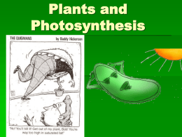 Plants and Photosynthesis - Effingham County Schools