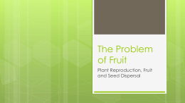 The Problem of Fruit