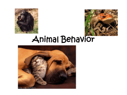 a discussion on wild behavior between animals and humans Anthropomorphism: how much humans and animals share is still contested cute internet videos and animals in children's entertainment with human-like intentions can be useful, harmful or both.