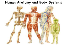 Human Anatomy and Body Systems The 11 Human Body Systems