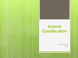 Animal Characteristics and Classification