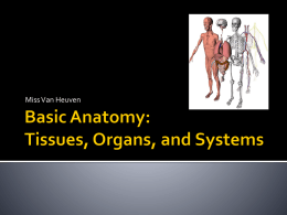 Tissues, Organs, and Systems