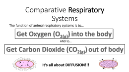 Comparative Respiratory Systems