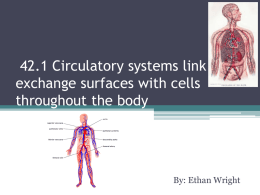 42.1 Circulatory systems link exchange surfaces with cells