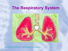 The Respiratory System - Mrs. Grigar