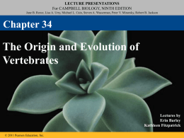 Vertebrate Evolution PPT