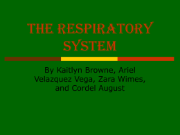 The Respiratory System final