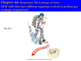Chapter 22: Respiration: The Exchange of Gases