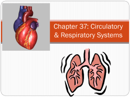 Chapter 37 circulation and respiration hya