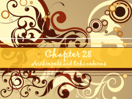Chapter 28 Arthropods and Echinoderms