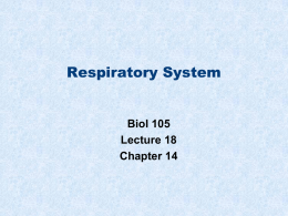 Respiratory system - Napa Valley College