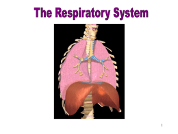 Respiratory System - Northwest Technology Center