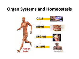 Organ Systems and Homeostasis - Mr. St. Peter's