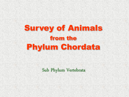 Survey of Animals from the Phylum Chordata