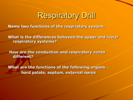 Respiratory System - Belle Vernon Area School District