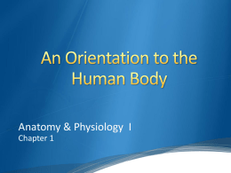 Orientation to the Human Body